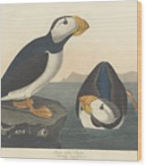 Large-billed Puffin Wood Print