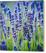 Lavander Flowers In Lavender Field Wood Print