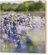 Lavender Purple Flower Blooming On Side Road In Texas At Sunset Wood Print