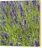 Lavender Scent Wood Print