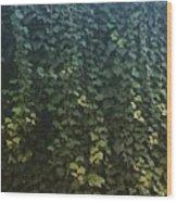 Leaf Of The Ivy   Wood Print