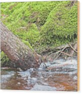 Leaning Tree Trunk By A Stream Wood Print