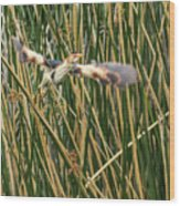 Least Bittern Flight Wood Print