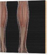 Leg Musculature Wood Print