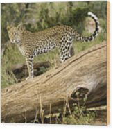 Leopard In The Forest Wood Print