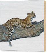 Leopard Panthera Pardus Sitting Wood Print