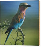 Lilac Breasted Roller Wood Print by Joseph G Holland