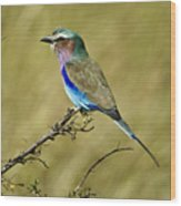 Lilac-breasted Roller Wood Print