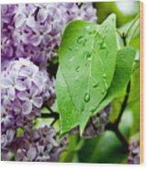 Lilac Drops Wood Print