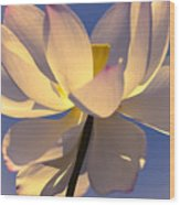 Lilies Of The Water V Wood Print