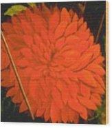 Linda's Red Dahlia Wood Print
