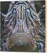 Lion Fish  Wood Print