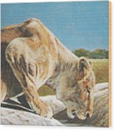 Lion Low Wood Print