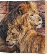 Lion Mates Wood Print