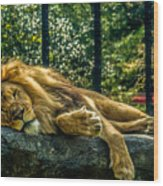 Lion Relaxing Wood Print