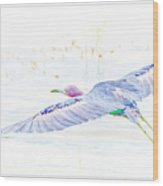 Little Blue Heron In Flight Wood Print