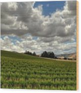 Livermore Vineyard Wood Print