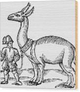 Llama, 1607 Wood Print