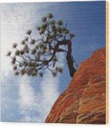 Lone Bonsai Tree In Zion Wood Print