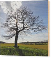 Lone Oak Tree In English Countryside Wood Print