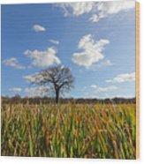 Lone Oak Tree In Wheat Field Wood Print