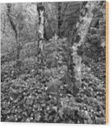 Lone Ranch Wood 4937 Wood Print
