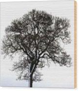 Lone Tree In Field Wood Print by John Short