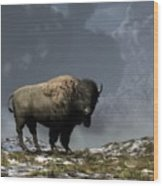 Lonely Bison Wood Print by Daniel Eskridge