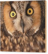 Long Eared Owl Wood Print