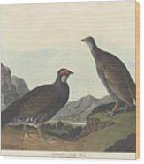Long-tailed Or Dusky Grous Wood Print