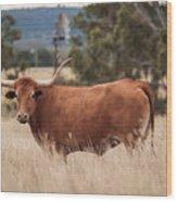 Longhorn Cow In The Paddock Wood Print