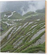 Longsheng Rice Terraces Wood Print