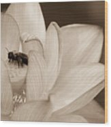 Lotus And Friend Wood Print