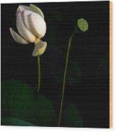 Lotus Pair Wood Print
