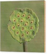 Lotus Seeds Wood Print