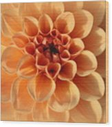 Lovely In Peaches And Cream - Dahlia Wood Print