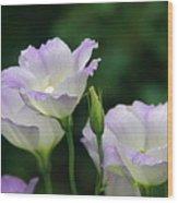 Lovely Lisianthus Wood Print