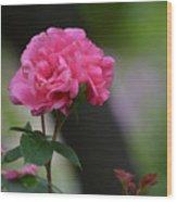 Lovely Pink Rose Wood Print