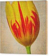 Lovely Textured Tulip Wood Print