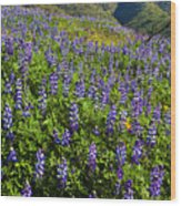 Lupine Hilltop Wood Print