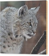 Lynx In A Crouch Ready To Pounce Wood Print