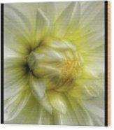 Macro Wood Print