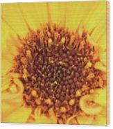 Macro Shot Of A Yellow Flower. Wood Print