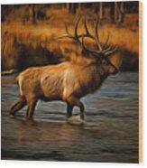 Madison Bull Wood Print