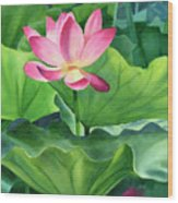 Magenta Lotus Blossom Wood Print