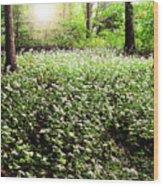 Magical Garden Wood Print