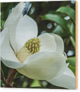 Magnolia Bloom IIi Wood Print