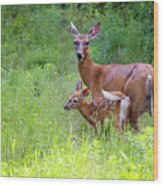 Maine White Tailed Deer Wood Print