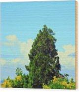Majestic Evergreen Wood Print
