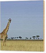 Majestic Giraffe Wood Print